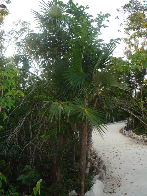 Ombligo Verde, Cancún Foto de Leslie Adame en Panoramio
